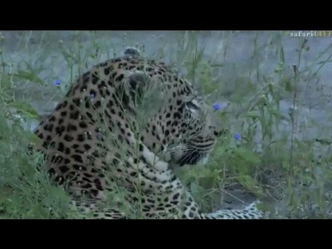 Pt 2 Safari Live's Sunset Safari Drive at 5:00 PM on April 06, 2017 ( Tingana )