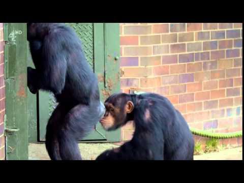 monkey butt sniff