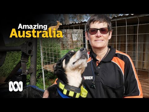 Working dogs face off in GPS challenge
