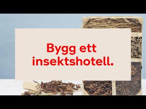 Bygg ett insektshotell