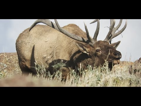 GLASS - An Elk Hunting Film In Gila National Forest