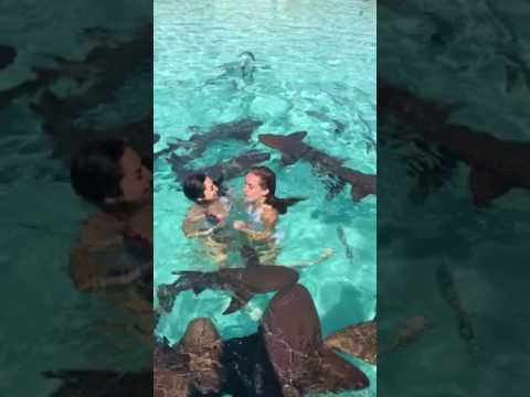 Girls Freak Out Swimming With Sharks