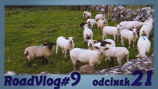 """""""Irlandia to taka jedna wielka wieś"""" - RoadVlog#9 odcinek 21"""