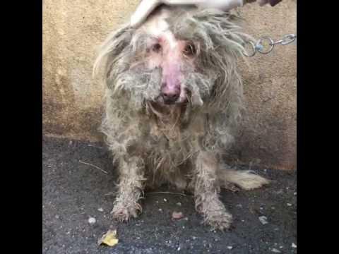 Konteynere Hapsedilerek Tanınmaz Hale Gelen Köpeğin Muhteşem Değişimi