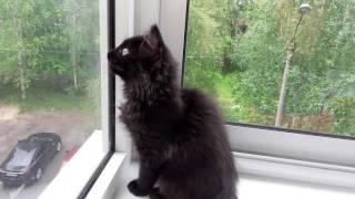 Кошка чирикает)))
