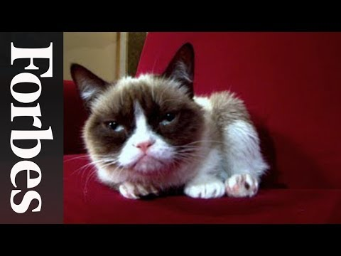 Grumpy Cat: The Forbes Interview | Forbes