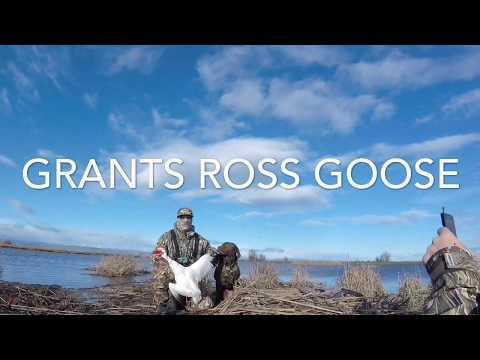 Sacramento refuge goose hunt 2017