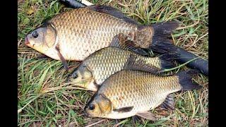Рыбалка на карася с ночевой в пруду Закидушки фидер попловокДумал провал утром пошла жара