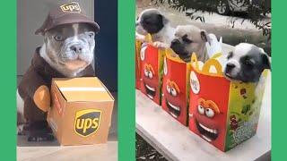 🤣Funny Dog Videos 2020🤣 Dog Fails Compilation 2020