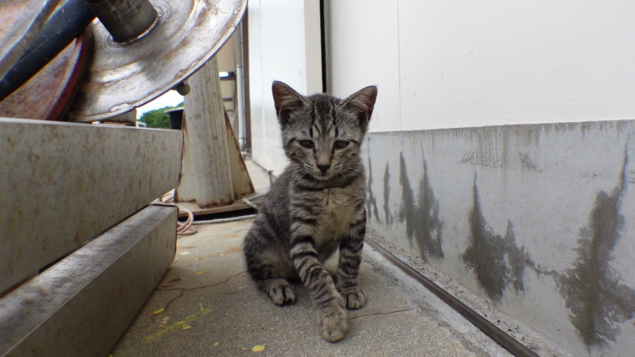 子猫カワイイ