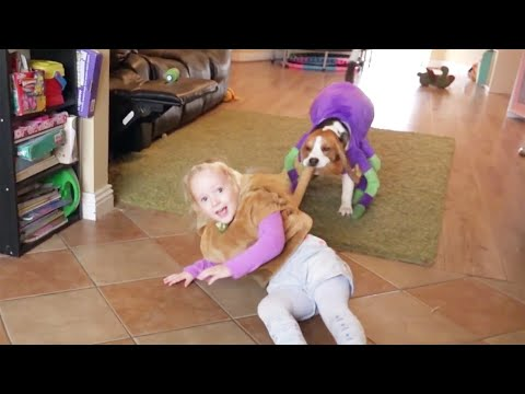 Crazy dogs in costumes play with baby: Big spider and lion want to eat a dinosaur??