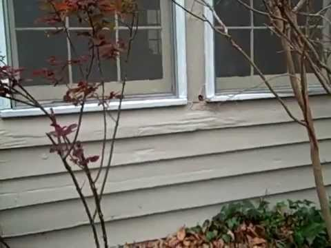 Atlanta Home Inspector Finds Termite Damage Behind A Homes