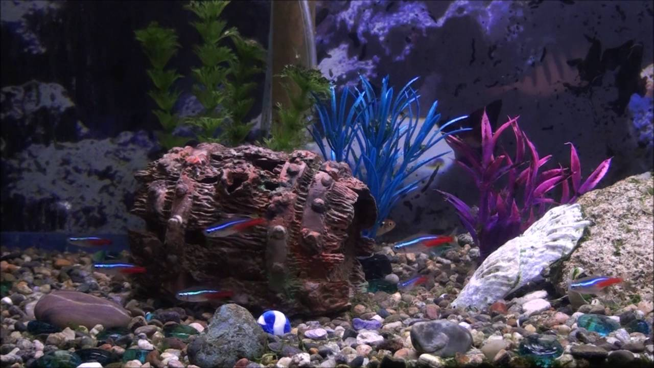 Freshwater fish tank youtube - Welcome To Your Youtube Fishtank Real Fish Tank Screensaver