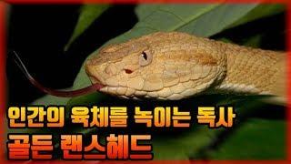 뱀이 너무많아 출입이 금지된 섬
