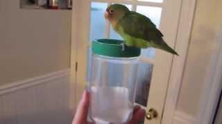 Nana my lovebird (029) Potty training her