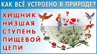 видео Сайт о экологических вопросах