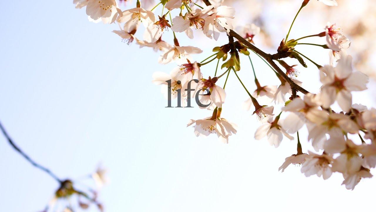 【田舎暮らし】キャンプ ブッシュクラフト  camp bushCraft&Jibier
