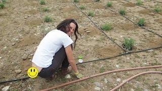 BUTT CRACK FARM GIRL!