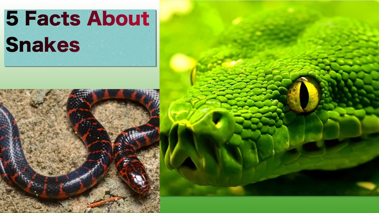 How they live... Reptiles: Learn All There Is to Know ...