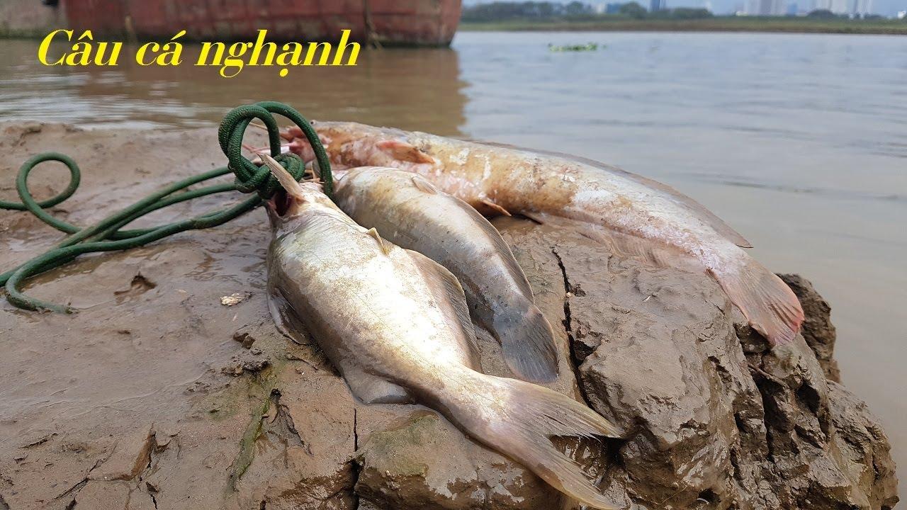 Đi câu cá sông hồng cùng với cao thủ câu cá nganh