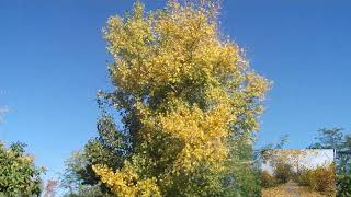 Осень -Осенние пейзажи и краски и музыка природы.