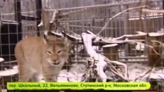 Каких экзотических животных держат дома москвичи