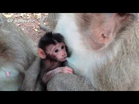 Nature Life Vivi Ep 1 - Four Mom And Four Baby Monkey