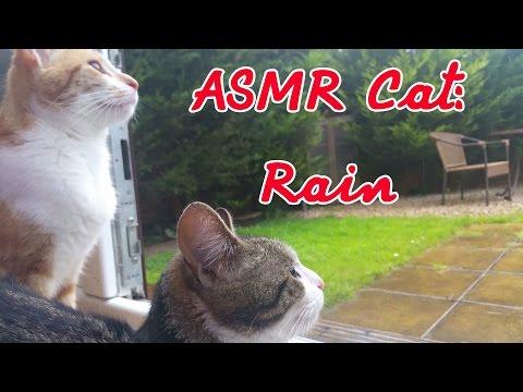 ASMR Cat: Rain on Conservatory, Nature Sounds [no talking]