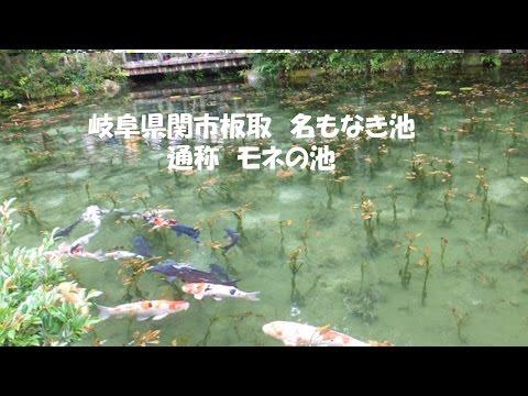 『モネの池』『シモネの池』と呼ばれる名もなき池  岐阜県関市板取