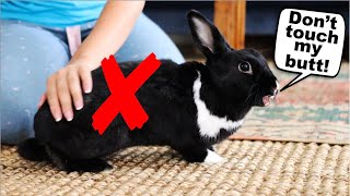 15 Things Rabbits Hate About Humans!