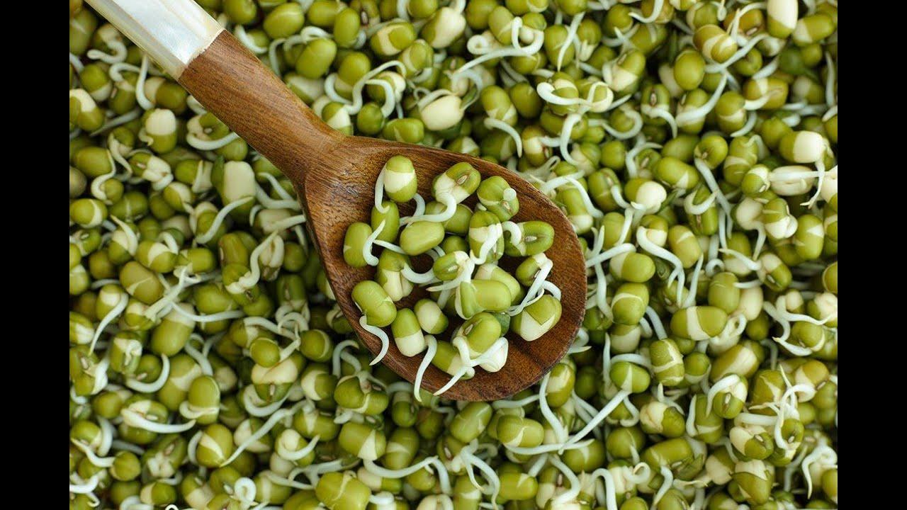 Как правильно прорастить проростки и употреблять их в пищу