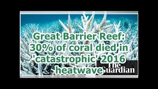 24h News - Great Barrier Reef: 30% of coral died in 'catastrophic' 2016 heatwave