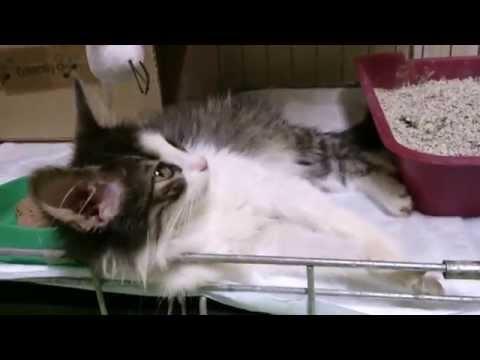 Котенок Тишка ищет своих котомампапу и родной дом 💒 !! ДОМА!