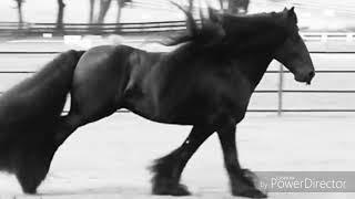 Клип. Лошади