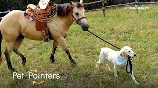 How To Stop Leash Pulling | Pet Pointers