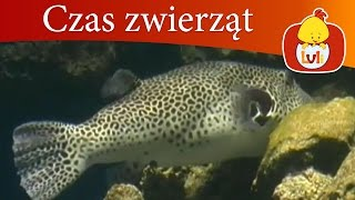 Czas zwierząt - Ryba + Alpaka, dla dzieci Luli TV - Videos for babies