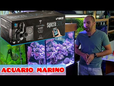 "acuario-marino-desde-""0""-/-capitulo-3-/-barato-vs-caro"