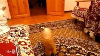 Приколы с животными, смешные кошки  fail animals, funny cats Цирк