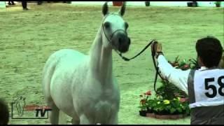 Dorar: la plus belle jument arabe du monde!