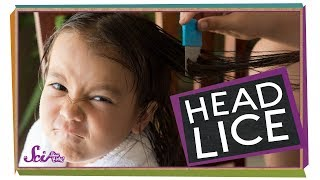 Where Do Lice Come From?