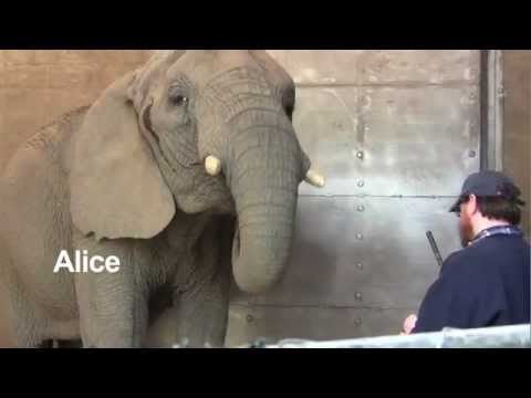 A morning bath at Roger Williams Park Zoo YouTube