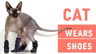 DIY Howto Make Cat Shoes | Cat's Reaction to Wearing Shoes