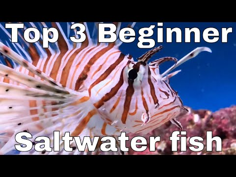 My TOP THREE Beginner Marine / Saltwater Fish For A SMALL Tank