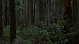 Rambo: First Blood - Forest Hunt