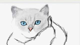 Два котенка (граффити в контакте)