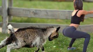 Saat Hewan Tidak Bersahabat Dengan Para Pengunjung Beginilah Jadinya