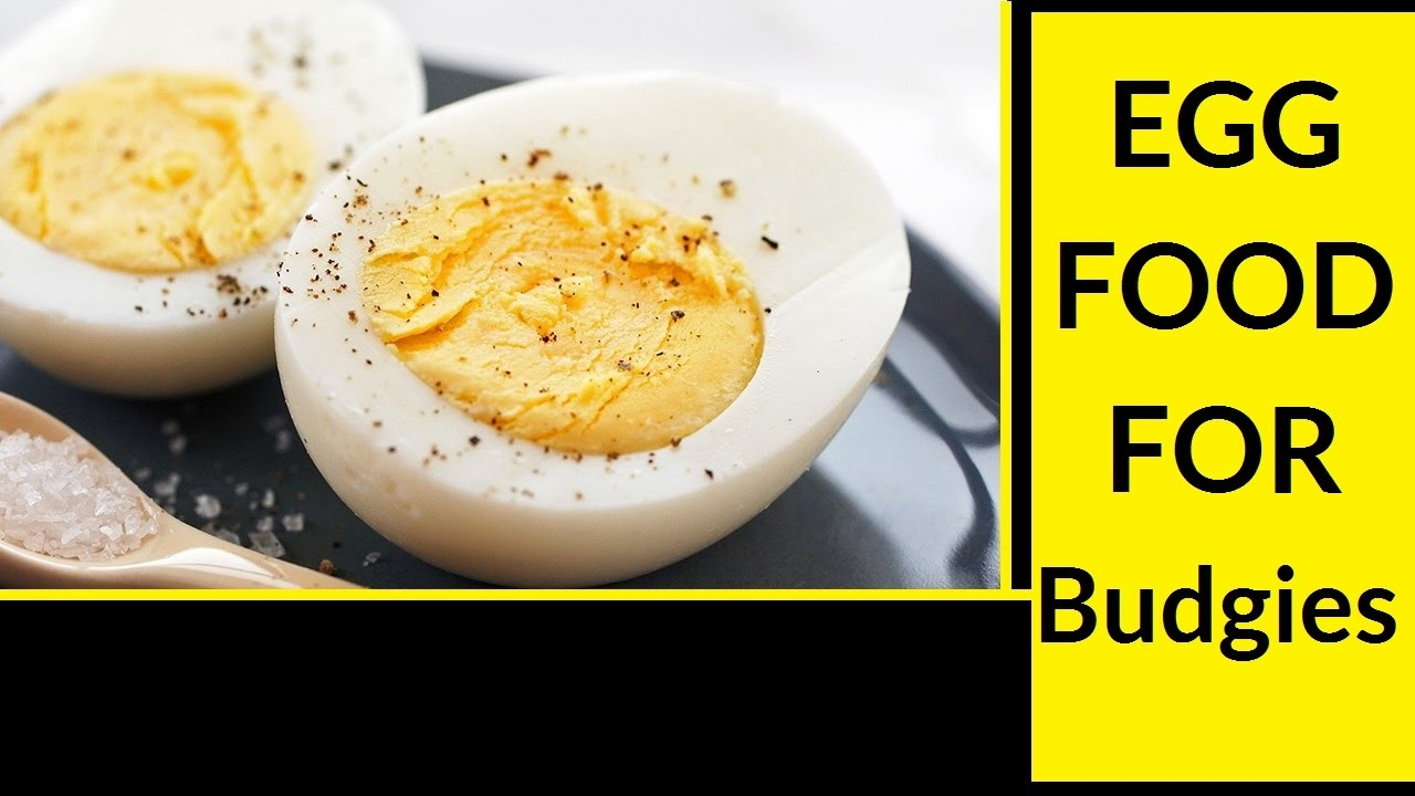 Egg food for australian budgies easy and healthy recipe youtube egg food for australian budgies easy and healthy recipe forumfinder Gallery
