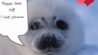 Stop the Slaughter, Save a Seal!