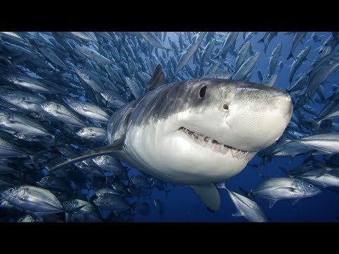 'Фильм 2019 года акула из проклятья супер фильм