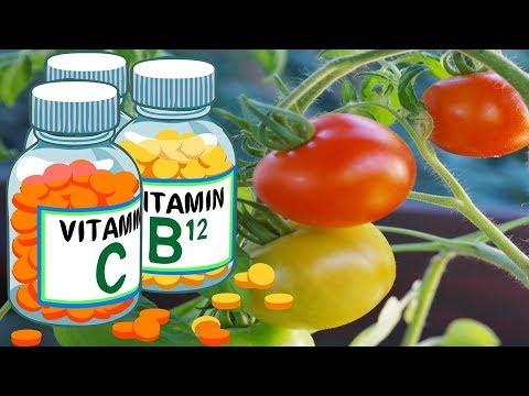 Столбур томатов. Как с ним бороться Есть ли  таблетки для лечения помидоров от вирусного заболевания